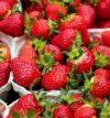 https://www.nazmrzku.cz/wp-content/uploads/2021/06/strawberries-1396330_640-100x107.jpg
